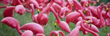 """Flocking Flamingo"" Fundraiser"